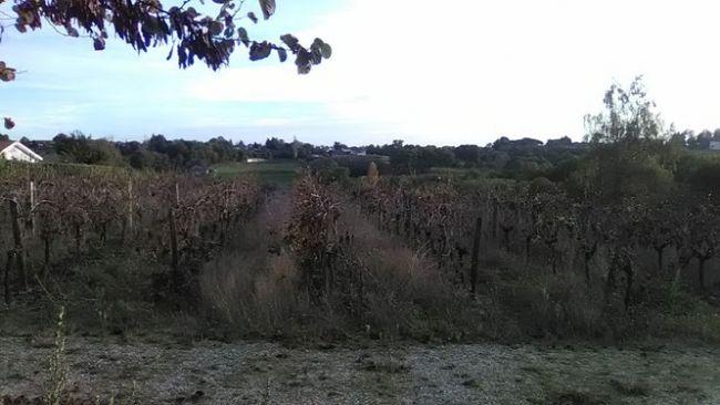 Terrain de 1150 m² sur la commune de Baurech